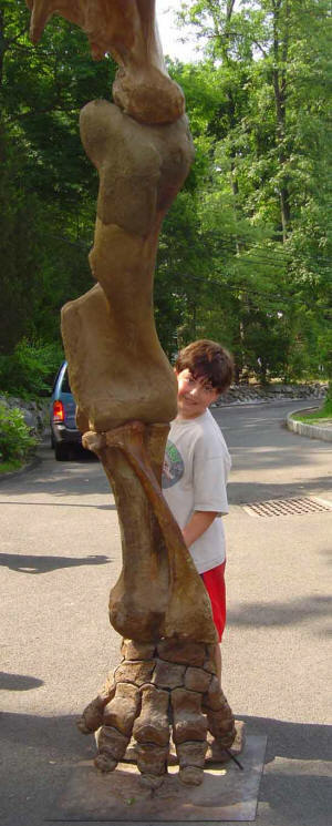 The Most Impressive 9-Ft. Mastodon Leg at your next EXTREME Dinosaurs Rock Dinosaur Birthday Party.